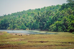 Strand-Naturmeer Indiens Goa Lizenzfreies Stockfoto