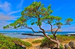 Strand in Oahu Stock Foto's