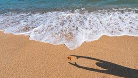 Strand och hav med azurt vatten, sommar att koppla av royaltyfria bilder