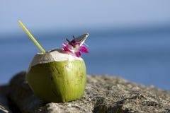 Strand och kokosnöt Fotografering för Bildbyråer