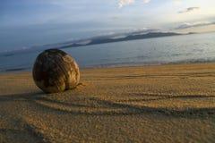 Strand och kokosnöt Arkivbild