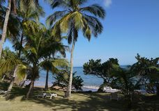 Strand och kokospalmer arkivbilder