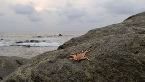 Strand och krabba i den Kribi Kamerun royaltyfri fotografi
