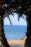 Strand och palmträd med solen royaltyfria foton