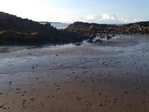 Strand och sandworms Arkivfoto
