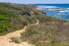 Strand och vegetation i Almograve Arkivbild