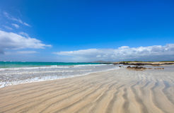Strand op het eiland van de Galapagos Isabela, Ecuador stock foto