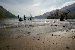 Strand op Loch Lomond Royalty-vrije Stock Foto's