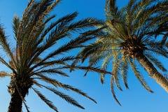 Strand op Tenerife, Kanarie, Spanje, Europa Royalty-vrije Stock Fotografie