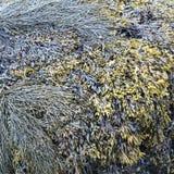 Strand Overzees Onkruid in vele aardachtige groene kleuren stock fotografie