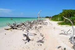 Strand på Cayo JutÃas Arkivfoto