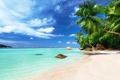 Strand på den Mahe ön, Seychellerna royaltyfri fotografi