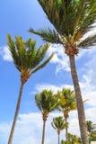 Strand på den tropiska ön Klart blått vatten, sand och palmträd Härlig semesterfläck, behandling och aquatics dominikan royaltyfri bild