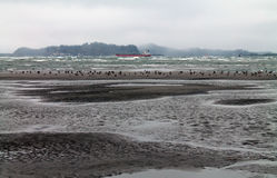 Strand på lågvatten med Seagulls Fotografering för Bildbyråer