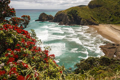 Strand på nyazeeländsk kust royaltyfri foto