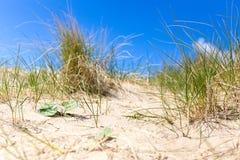 Strand på Scheveningen, Nederländerna Arkivfoto