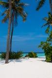 Strand Palmen und sunbeds stockbild