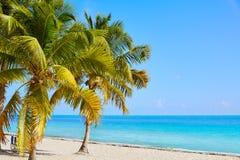 Strand-Palmen US Key West Florida Smathers stockfotos