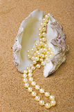 Strand of pearls lays in shell stock photo