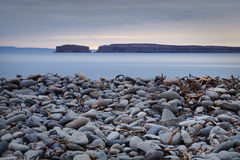 strand pebbly iceland Royaltyfria Foton