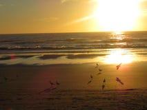 Strand - Playa Argentina trevlig dag royaltyfria bilder