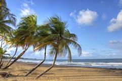 strand Puerto Rico Royaltyfria Bilder