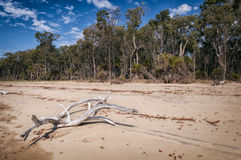 Strand in Queensland, Australië Royalty-vrije Stock Foto