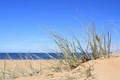 Strand-Schilfe lizenzfreie stockbilder
