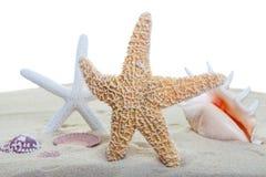 Strand sealife stock afbeelding