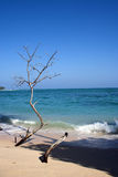Strand an seinem Besten Lizenzfreies Stockbild
