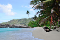 Strand in Seychellen royalty-vrije stock afbeeldingen