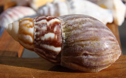 Strand-Shell auf Holz 2 Lizenzfreie Stockbilder