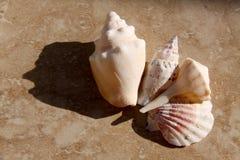 Strand-Shells auf Fliese Stockfoto