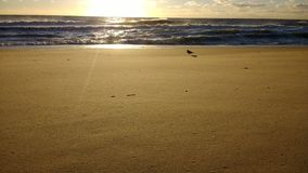 Strand am Sonnenaufgang Lizenzfreie Stockfotografie