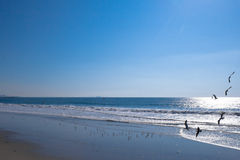 Strand-Szene mit Flugwesen-Seevögeln Lizenzfreie Stockbilder