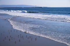 Strand-Szene mit Seevögeln Stockbild