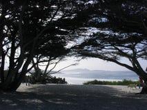 Strand till och med cypressträden Royaltyfria Foton