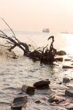 Strand, Treibholz und Schiffe gegen die untergehende Sonne im Foto nicht sind die übliche Perspektive Stockfotos