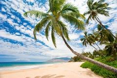 strand tropiska maui arkivfoton