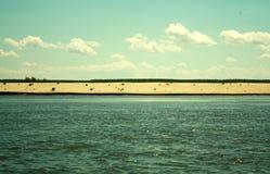 Strand und die Donau Stockfotografie
