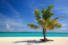 Strand- und Kokosnusspalme, Lipe Insel, Thailand stockfoto