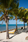 Strand- und Palmen Lizenzfreie Stockbilder