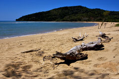 Strand und Sand in neugierigem sind und ein Baum Stockfoto