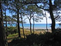 Strand und Wald Stockfotografie