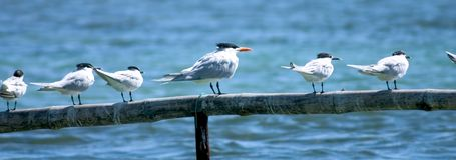 Strand-Vögel Lizenzfreie Stockfotos