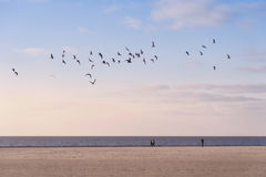 Strand van Amrum Royalty-vrije Stock Foto's