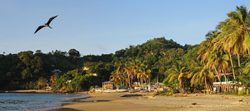 Strand van Castara Dorp Tobago Stock Afbeelding