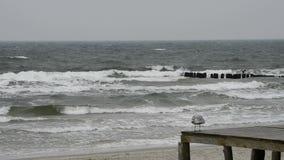 Strand van de Oostzee Stock Afbeelding