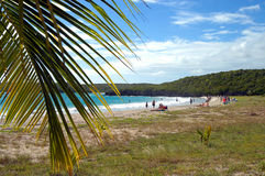 strand vieques Arkivfoton