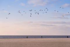 Strand von Amrum Stockbild